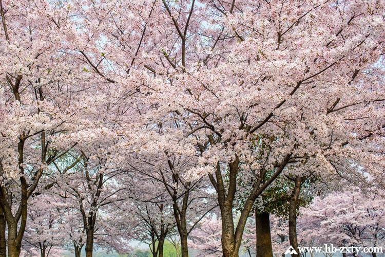 """018春天在这花花世界看花的必备指南"""""""