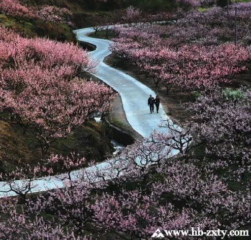 春季踏青赏花寻宝团建拓展活动