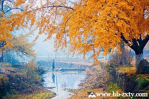 随州拓展基地:千年银杏谷风景区