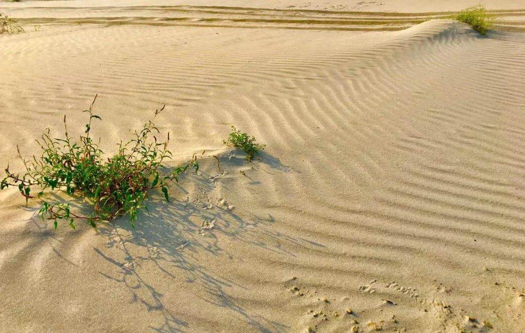 """湖北不沿海,居然有""""沙漠"""",快来看看怎么回事!"""