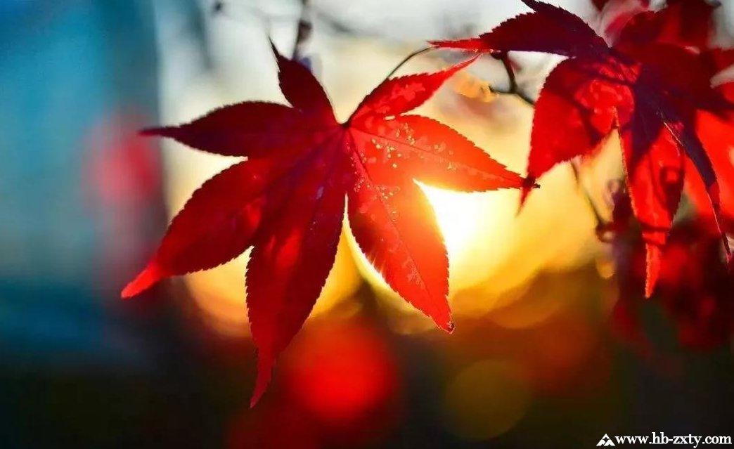 秋季户外拓展,让你承包湖北整个秋天!