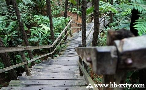 广东拓展基地:清远森波拉森林公园