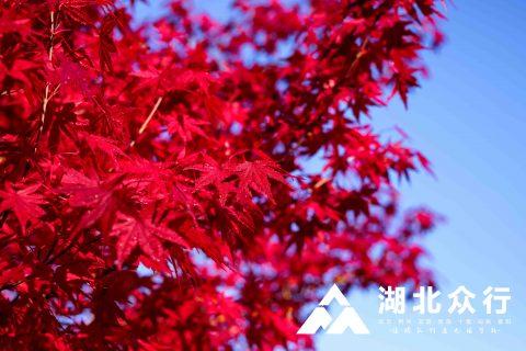 红枫似火|四月出行日志