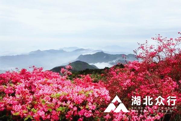 花开的声音|四月赏花季