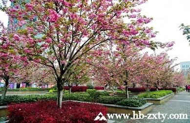 春季团建最佳选择地——十堰,5个地方玩转春天!