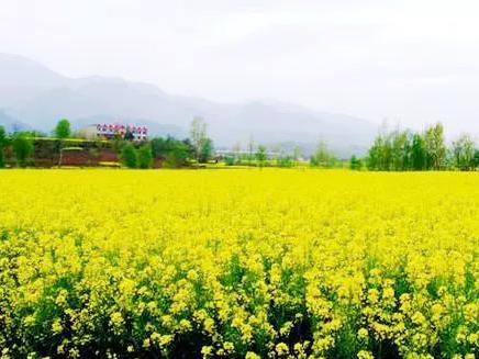 阳春三月,武汉承包你的油菜花海