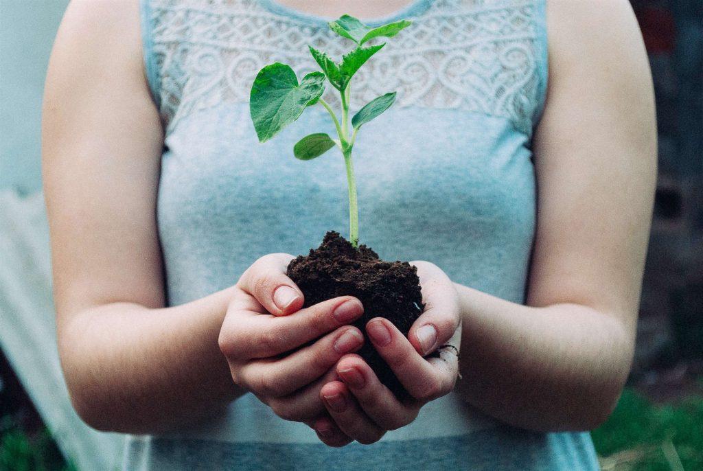 植树节|让森林回归城市